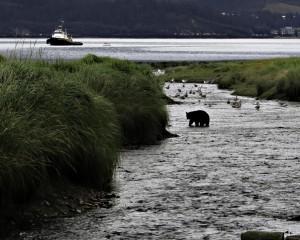 Valdez-Bear-2_web